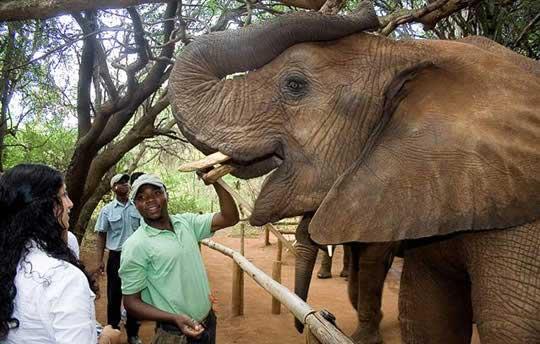 The-elephant-sanctuary-02