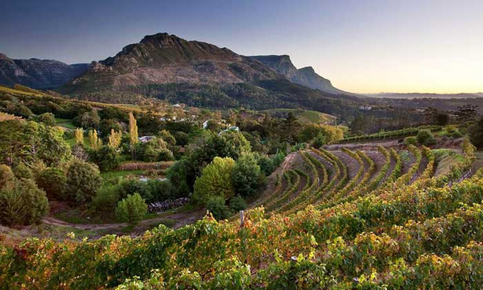 wine-tour-cape