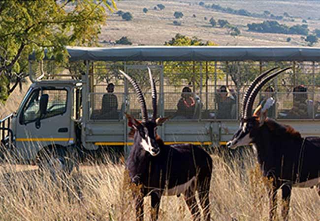 lion-and-safari-park