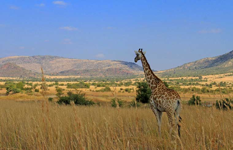 Pilanesberg-N-P