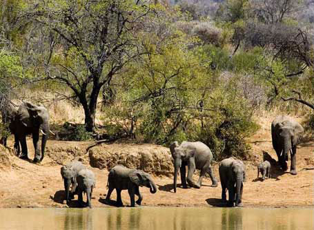 Sun City & Pilanesberg National Park-Combination